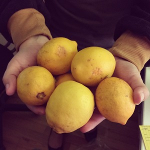 A friend of mine visited San Francisco and brought me back Meyer lemons from her partner's aunt's tree! Perhaps it's my turn to bring tasty treats into the office...